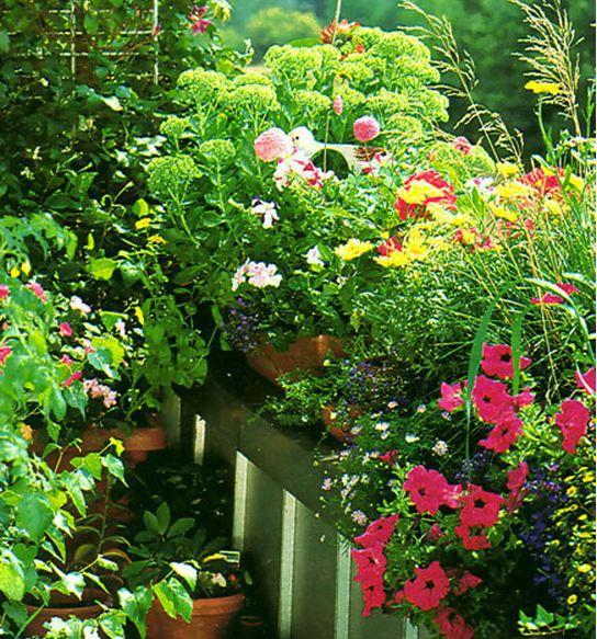 Цветоводство :: цветы.
